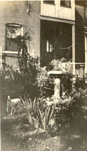 The garden of Gerard William Helbling, August 1934. Family photo album.